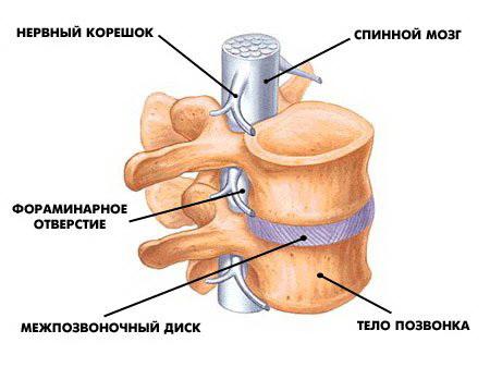 Как увеличить грудь своими руками